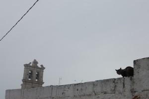 Puglia, June 2010